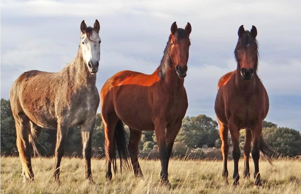 פנטסטי ספרד - חקלאות וסיוע בחקר בעלי חיים - GoEco SQ-51