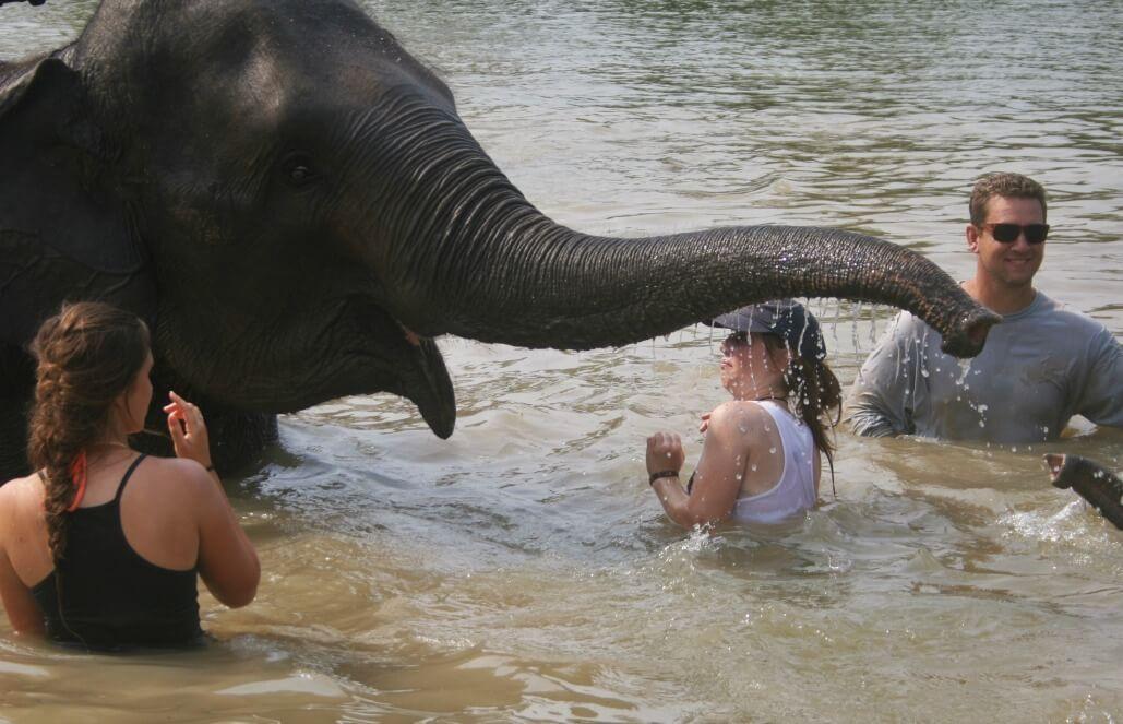 תאילנד – טיפול בפילים וסיוע קהילתי