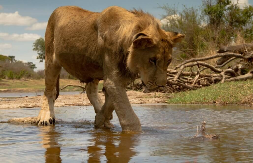 זימבבואה – צילום ושימור חיות בר במפלי ויקטוריה