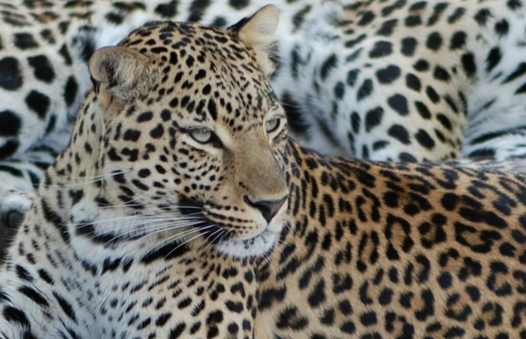 דרום אפריקה – פעילות בחווה לחיות בר אפריקאיות
