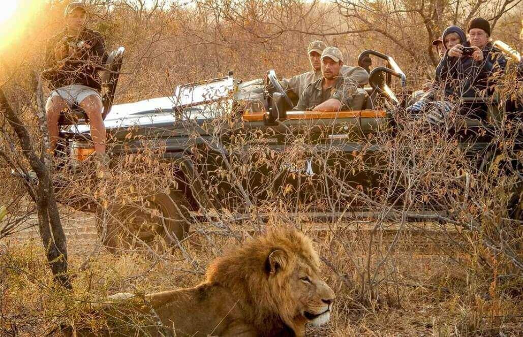 """דרום אפריקה – שימור """"חמשת הגדולים"""", ספארי בקרוגר – לבני 50+"""