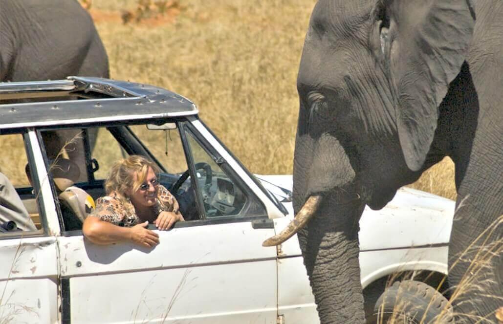 זימבבואה וזמביה – שימור אוכלוסיית אריות, ספארי, מפלי ויקטוריה – לבני 50+