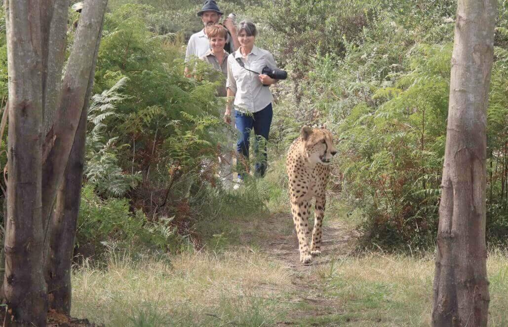 דרום אפריקה – עבודה עם ילדים וטיפול בבעלי חיים, ספארי – לבני 50+