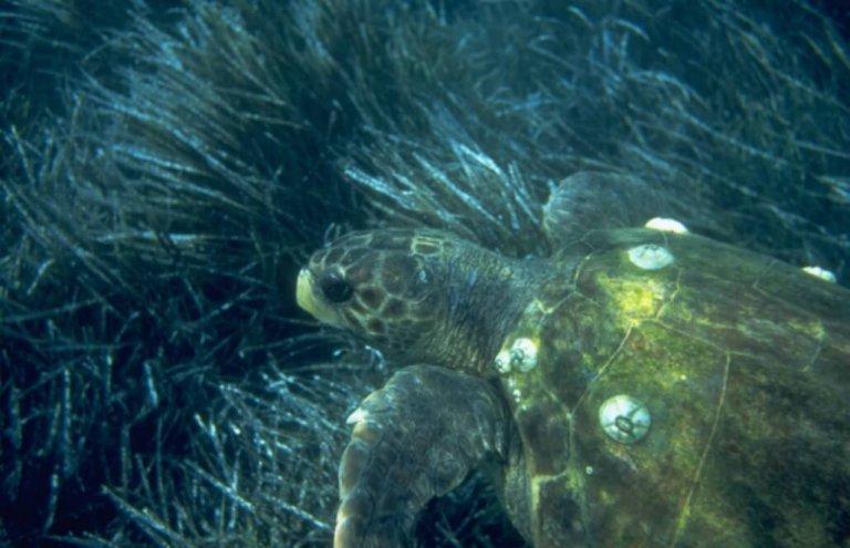 יוון צבי ים11