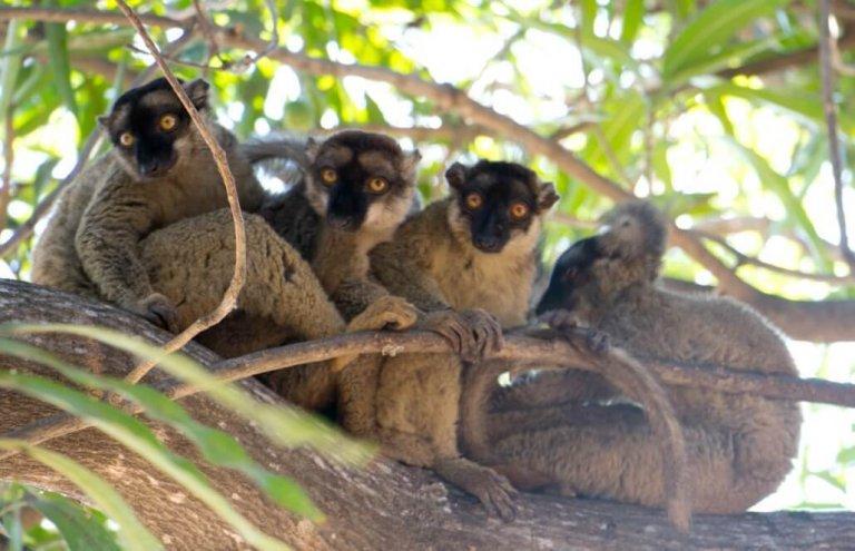 מדגסקר למורים12