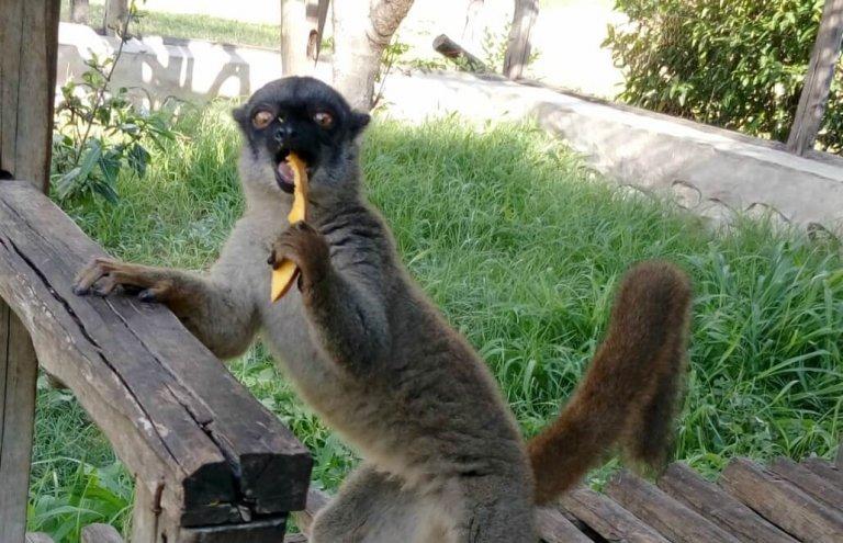 מדגסקר למורים21