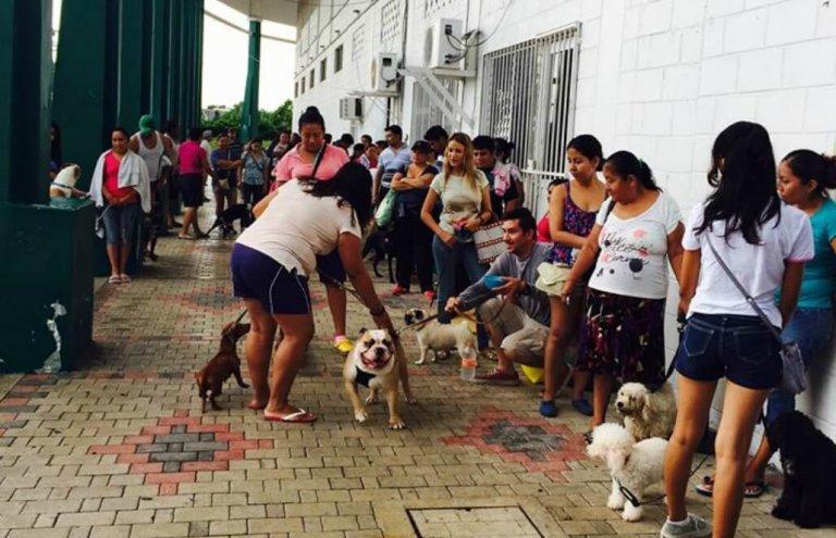 מקסיקו - טיפול בבעלי חיים וסיוע וטרינרי10