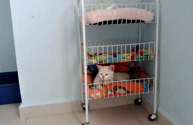 מקסיקו - טיפול בבעלי חיים וסיוע וטרינרי14
