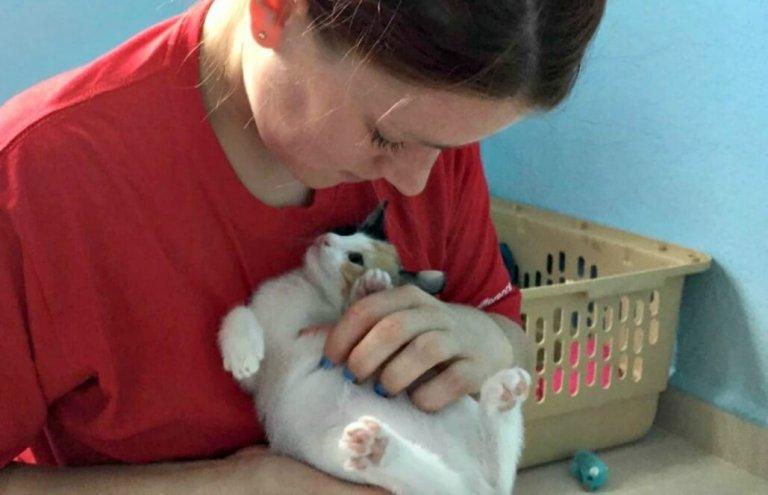 מקסיקו - טיפול בבעלי חיים וסיוע וטרינרי15