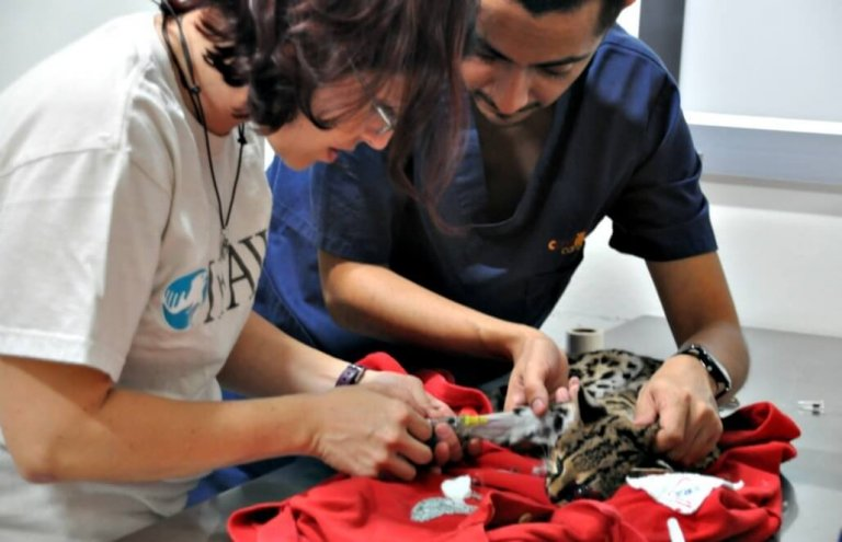 מקסיקו - טיפול בבעלי חיים וסיוע וטרינרי2