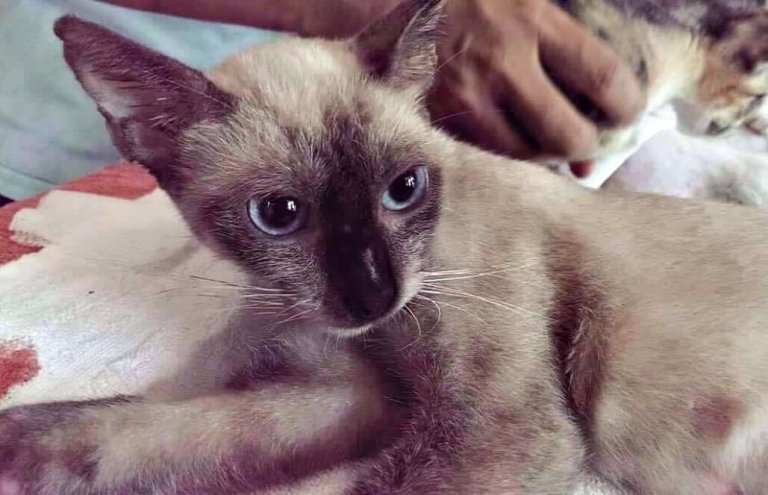 מקסיקו - טיפול בבעלי חיים וסיוע וטרינרי6