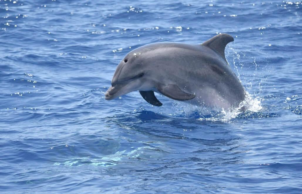 ספרד – חקר דולפינים ולווייתנים באיים הקנריים