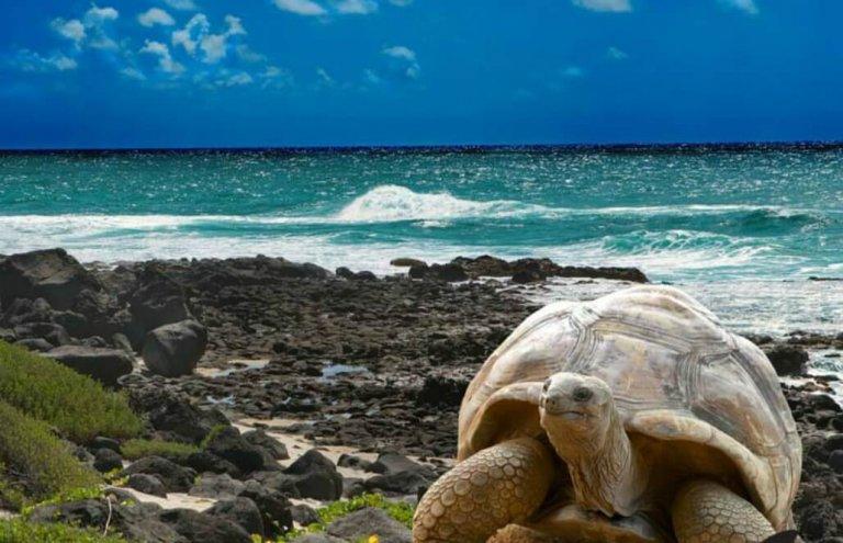 אקוודור - שימור צבי ענק באיי גלאפגוס