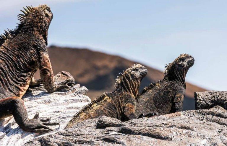 שימור צבי ענק באיי גלאפגוס-13