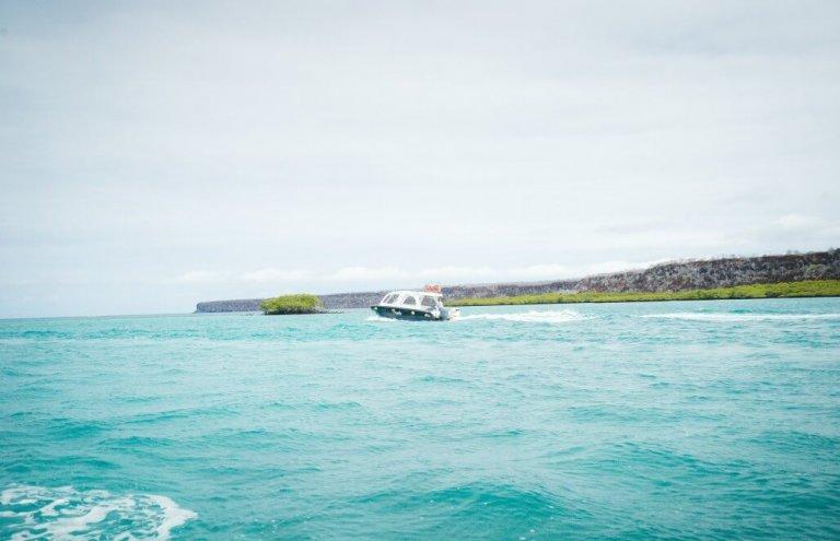 שימור צבי ענק באיי גלאפגוס-14