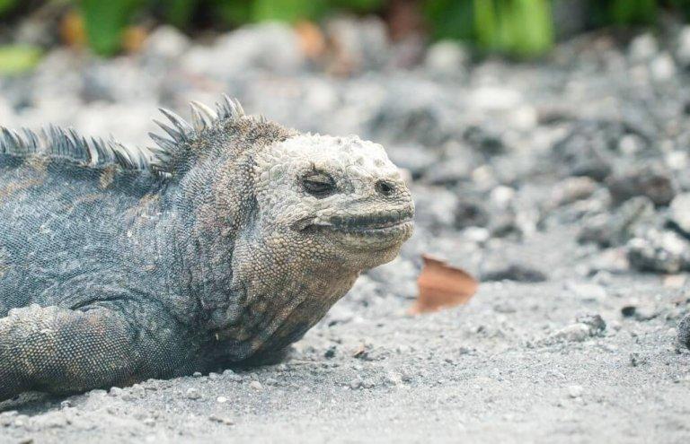 שימור צבי ענק באיי גלאפגוס-20