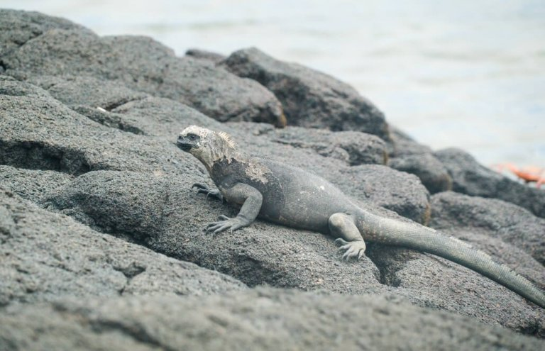 שימור צבי ענק באיי גלאפגוס-22