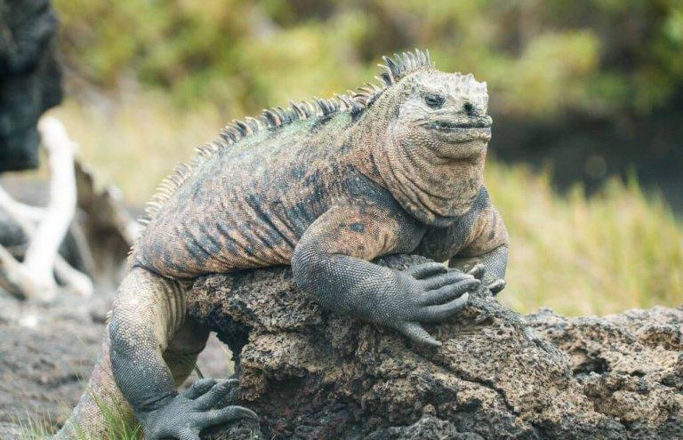 שימור צבי ענק באיי גלאפגוס-23