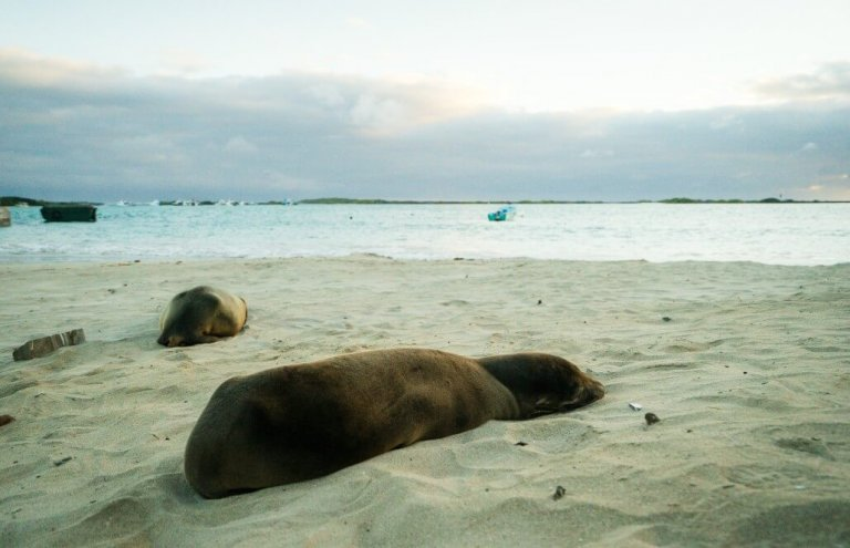 שימור צבי ענק באיי גלאפגוס-24