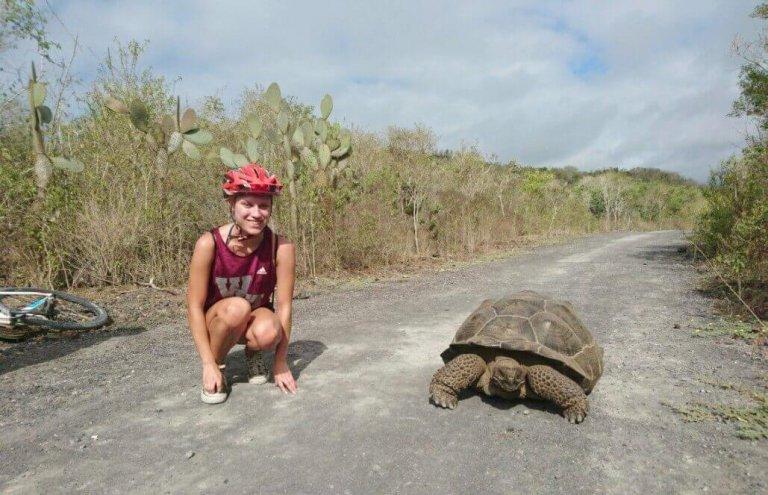 שימור צבי ענק באיי גלאפגוס-26