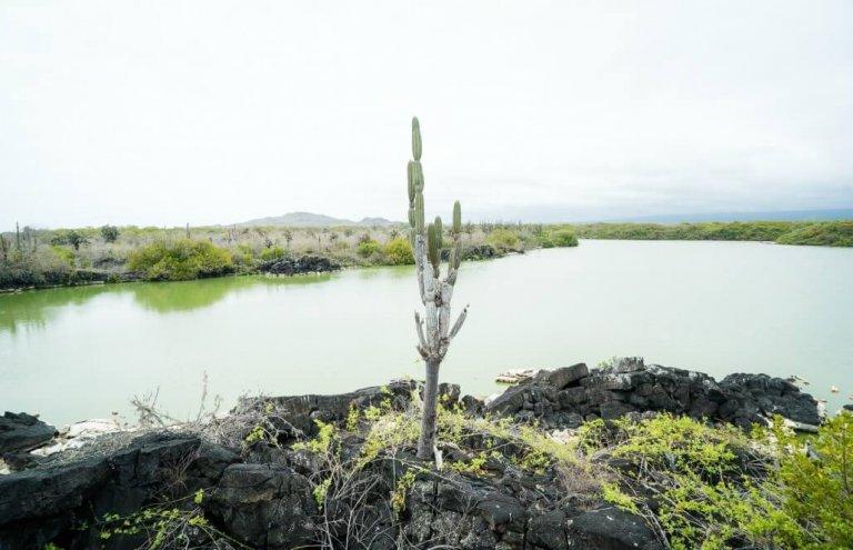 שימור צבי ענק באיי גלאפגוס-29