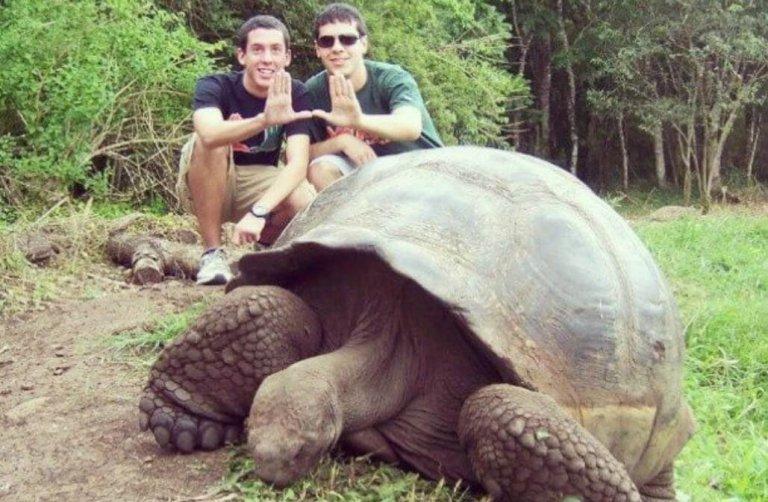 שימור צבי ענק באיי גלאפגוס-4