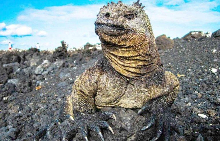 שימור צבי ענק באיי גלאפגוס-8