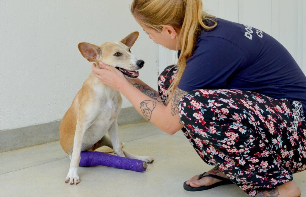 סרי לנקה – טיפול בכלבים וסיוע וטרינרי