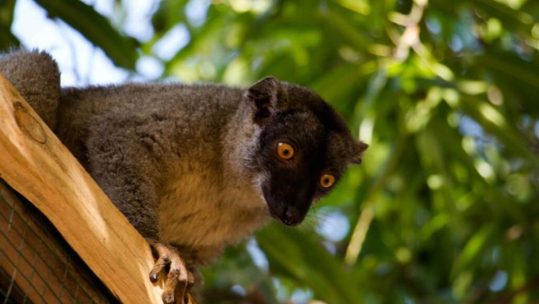 מדגסקר – מרכז שימור ללמורים