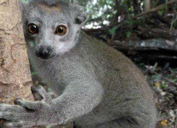 מדגסקר – חקר חיות בר וסביבה