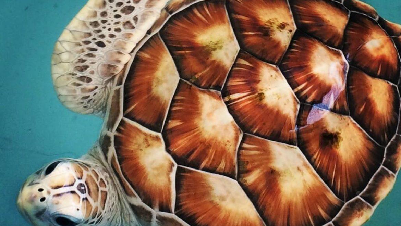 מלדיביים – מרכז להצלת צבי ים