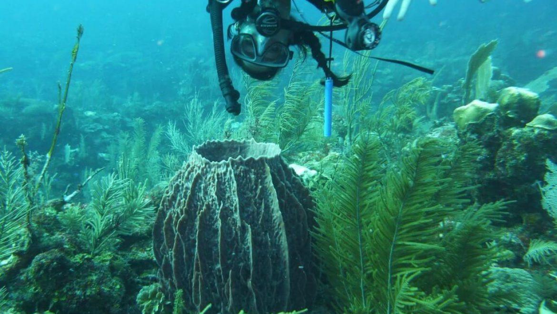 מקסיקו – צלילה ושימור תת ימי