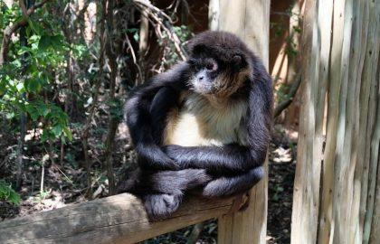 דרום אפריקה – סיוע לבעלי חיים ופעילות בקהילה