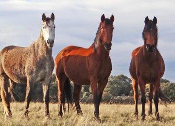 ספרד – חקלאות וסיוע בחקר בעלי חיים