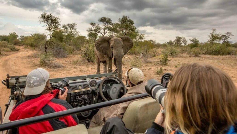 דרום אפריקה – צילום חיי הבר ושימור סביבה בפארק קרוגר