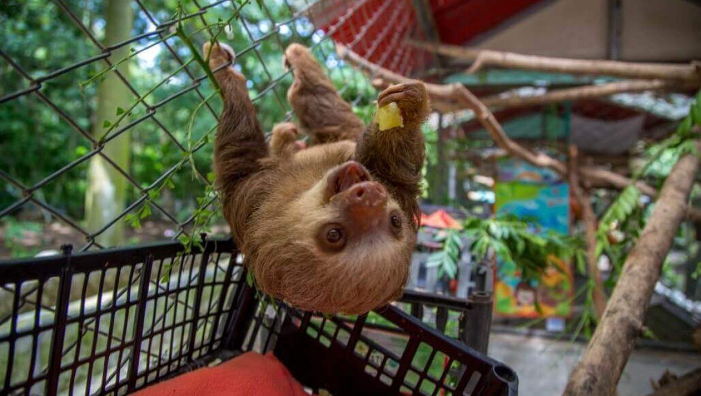 קוסטה ריקה – מרכז להצלת חיות בר