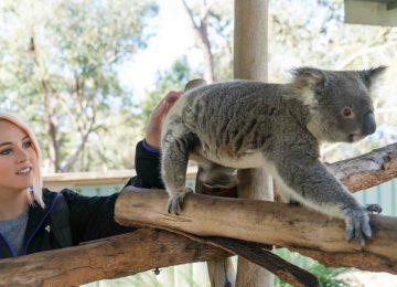אוסטרליה – שימור חיות הבר