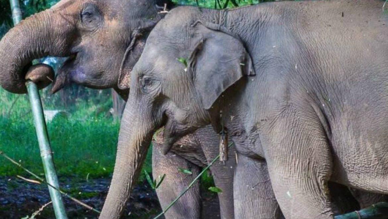 תאילנד – מקלט לפילים בצ'אנג ראי
